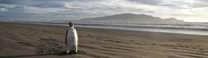 Najsłynniejszy pingwin w brzuchu rekina?