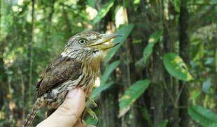 Niemożliwe stało się faktem. 381 nowych gatunków w Amazonii