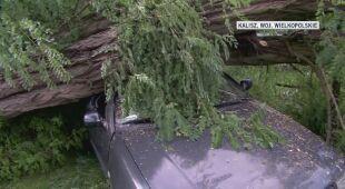 Drzewo upadło na samochód w Kaliszu