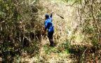 W meksykańskiej dżungli odkryto dwa miasta Majów
